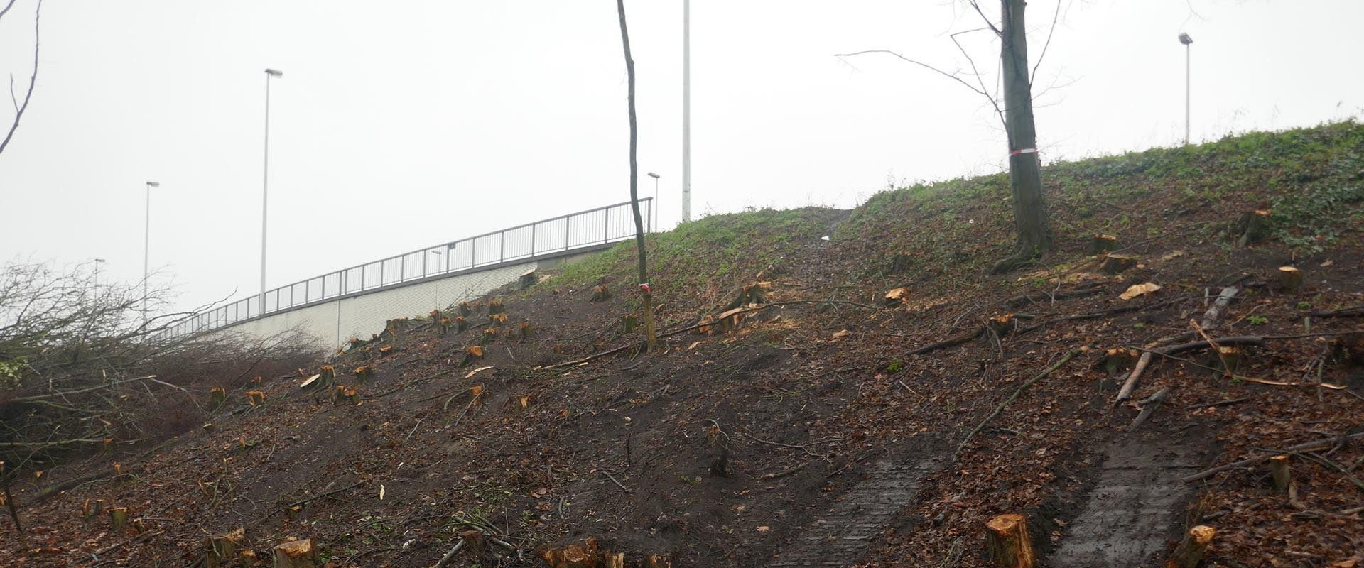 Wegen en verkeer kapt groenbuffer aan Katelijne-eiland kaal