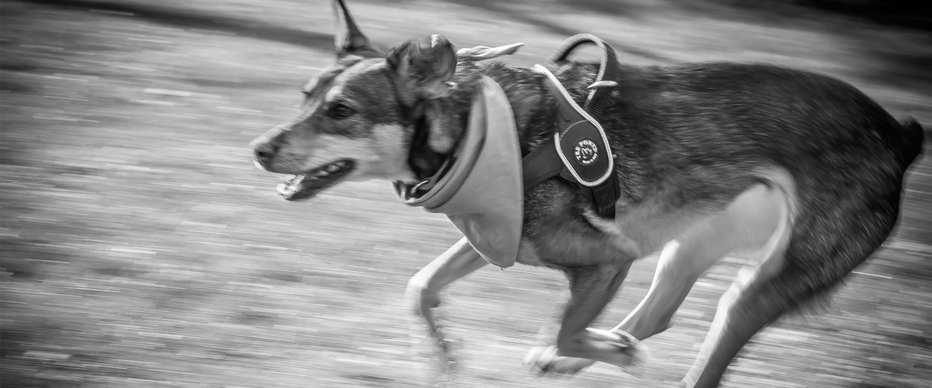 Rescue Romanian Straydogs trekt zich het lot aan van straathonden